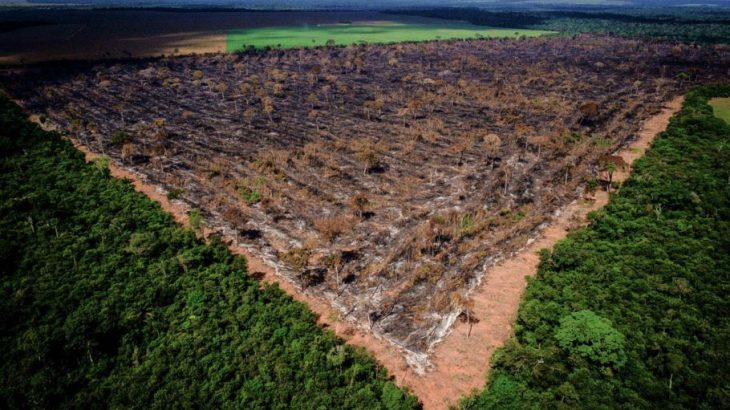 O catastrófico indicador é quase o dobro dos 660 km² devastados no ano passado, superando ainda os registros de março e abril deste ano. (Mayke Toscano/Reprodução)