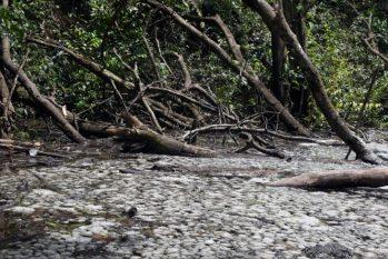 Ambientalistas criticaram a demora de análise do processo (Ricardo Oliveira/Revista Cenarium)
