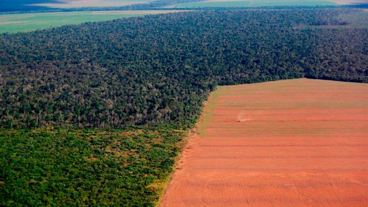 Aprovação de pedido de urgência do 'PL da Grilagem' vai facilitar a legalização do roubo das terras públicas, afirma Greenpeace