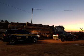 Foram apreendidos 208 metros cúbicos de madeira extraída ilegalmente (Divulgação/PF)