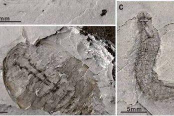 Até então, evidências mais antigas vinham de rochas com pouco mais de 600 milhões de anos  (Science/Divulgação)