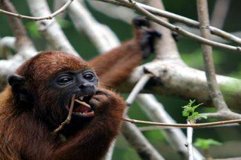 O lar das mais diversas espécies de animais e plantas, a floresta é um bem essencial para a existência do planeta. (Ricardo Oliveira/Revista Cenarium)