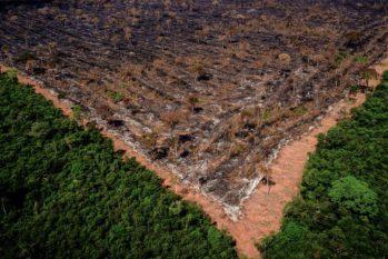 Medida é criticada por ativistas e ambientalistas, pois o texto legaliza ocupações irregulares, beneficiando grileiros e aumentando o risco de desmatamento (Mayke Toscano/Gcom-MT)