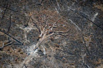 De acordo com o Inpa, uma única árvore de 10 metros de altura emite, em média, 300 litros de água por dia (Christian Braga/Greenpeace)