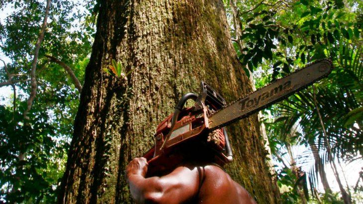 ESPECIAL | Custo Devastação – Povos da Floresta sentem impactos