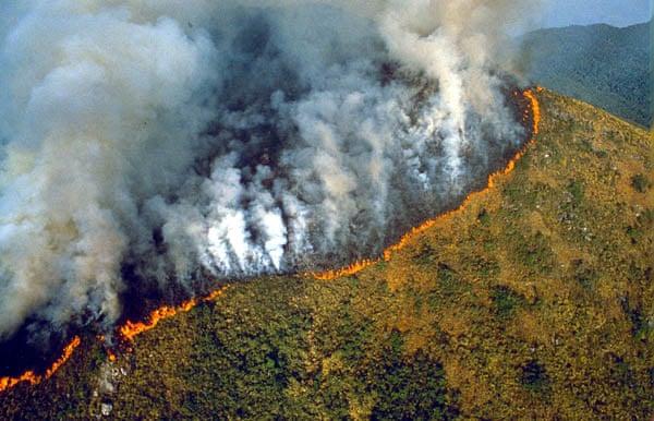 É o 2º junho seguido a bater recorde da década; situação deve piorar com início do período seco na mata (Foto: The Guardian)