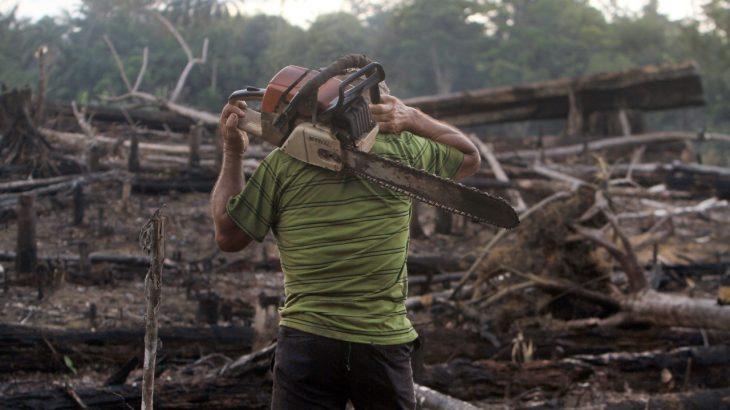 Em 2020, desmatamento da Amazônia atingiu 11 mil quilômetros quadrados, batendo recorde de 2008. Em 2021, a devastação vem registrando marcas históricas consecutivas, mês a mês (Ricardo Oliveira/Cenarium)