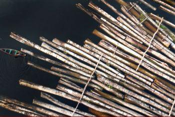 Dados do Inpe mostram evolução do desmatamento mês a mês e revelam recordes consecutivos, em março, abril e maio (Ricardo Oliveira/Cenarium)