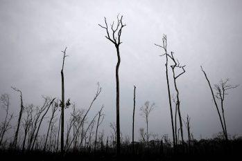 Árvores queimadas em Apuí, interior do estado do Amazonas (Bruno Kelly/Reuters)
