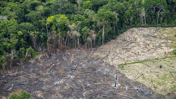 The states of Pará, Amazonas and Mato Grosso led the devastation ranking (Reproduction/Greenpeace Brasil)