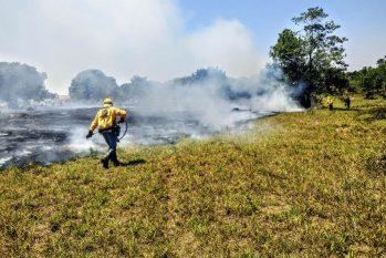 ONG cita desastres ambientais como ondas de calor e incêndios (Divulgação/ Instituto Brasília Ambiental)