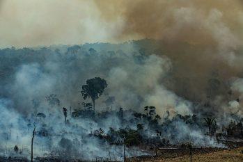 Iniciativa busca minimizar perdas decorrentes das mudanças climáticas (Victor Moriyama/Greenpeace)