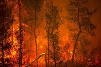Incêndio atinge floresta na ilha de Eubeia, na Grécia (Angelos Tzortzinis/AFP)