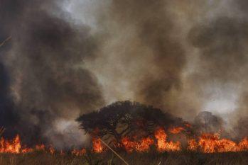Fogo queima vegetação em Poconé, às margens da estrada Transpantaneira (Lalo de Almeida/Folhapress)