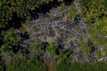 Floresta Amazônica vem sendo devastada no maior ritmo dos últimos dez anos (Tarso Sarraf/AFP)