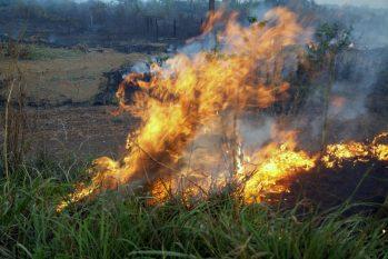 Os indicadores apontam que setembro é, até agora, o segundo mês de 2021 em que a vegetação mais padeceu em Rondônia. (Reprodução/ Governo de Rondônia)