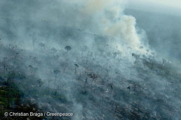 Imagens registradas recentemente em sobrevoo ao sul do Amazonas e oeste do Pará (Christian Braga/Greenpeace)
