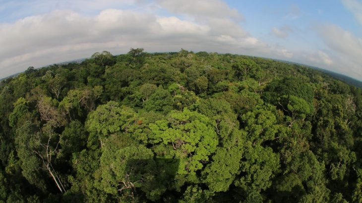 And the Amazon, which concentrates the largest biodiversity, has great power for development (Aguilar Abecassis)