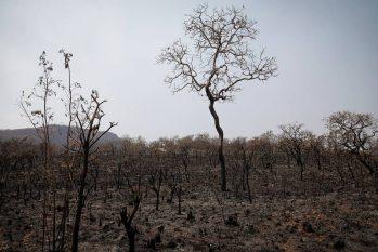 Parte da mata da Chapada dos Veadeiros destruída pelo fogo Foto: PABLO JACOB / Agência O Globo Newsletters