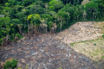 Degraded area in the south of Amazonas state. (Greenpeace/Promotion)