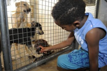Registro mostra criança acariciando cachorrinho em canil de centro de controle de zoonoses. (Divulgação/ EBC)