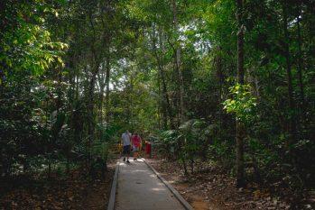 Manauaras acreditam que a floresta em pé é benéfica para o desenvolvimento econômico do Estado. (Divulgação/ FAS)
