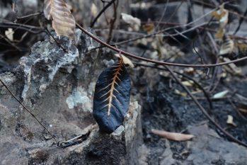 O clima extremamente seco e quente facilita o alastramento do fogo no Cerrado (João Paulo Guimarães/CENARIUM)