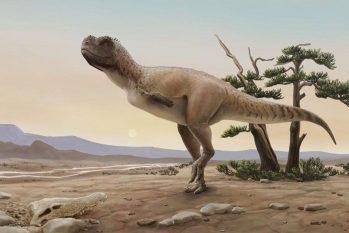 Iniciadas em 2002, escavações só revelaram novo espécime em 2014 (© Julia d'Oliveira/Divulgação/Direitos reservados)