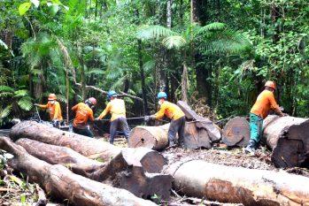 Segundo dados do Imaflora de 2017, o manejo florestal gerou mais de R$ 4,4 bilhões e mais de oito mil empregos no Brasil. (Reprodução/Internet)