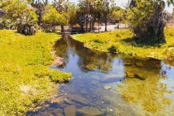 Projetos de reflorestamento ajudam a aumentar volume dos rios. (Divulgação/ EBC)