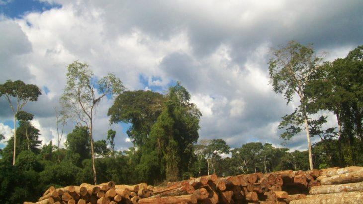 A study conducted by Rede Simex points to exploitation in an area equivalent to 18 thousand soccer fields in Amazonas (Reproduction/Tayane Carvalho)