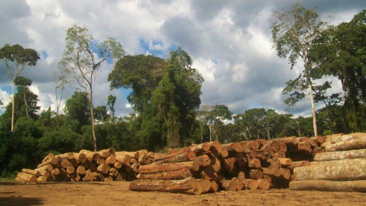 Estudo realizado pela Rede Simex aponta exploração em área equivalente a 18 mil campos de futebol no Amazonas (Reprodução/Tayane Carvalho)